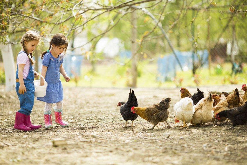 fattoria didattica per bambini piccoli
