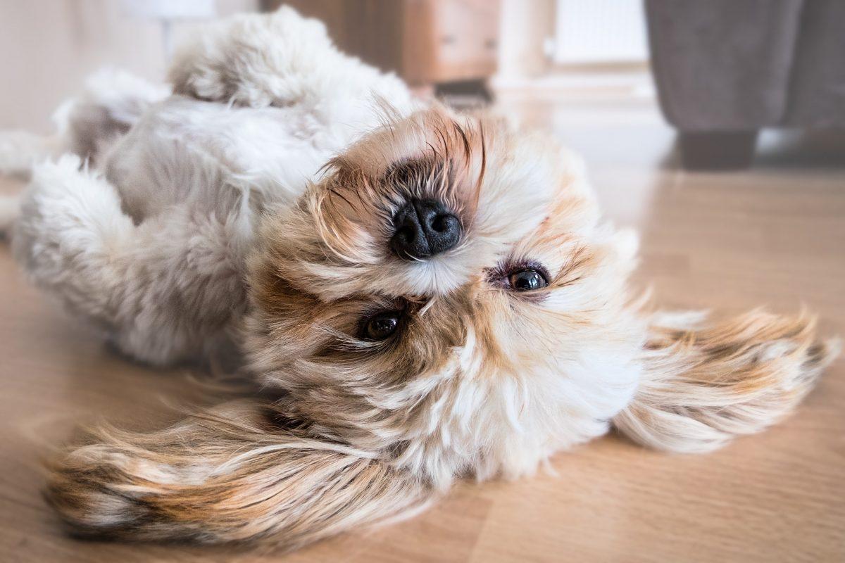 Perché prendere un cane in famiglia?