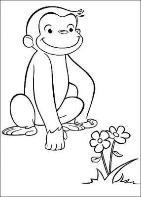 scimmietta George