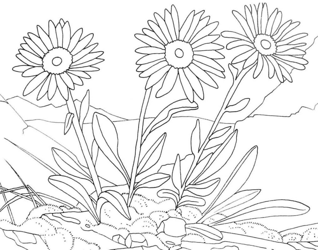 disegno da colorare gratis