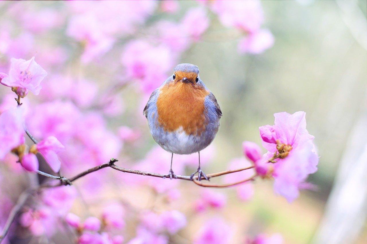 Poesie sulla natura per bambini: le più belle da imparare
