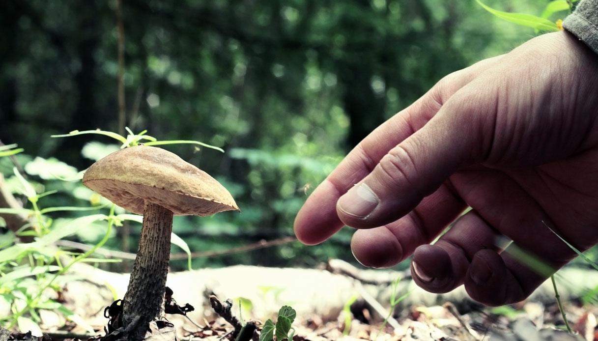 Funghi ai bambini: si possono dare? Ecco cosa dice l'esperto