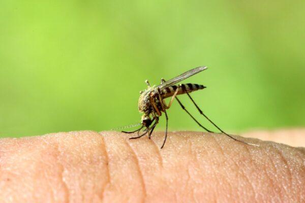 punture di zanzare bambini