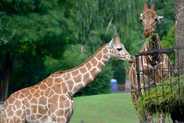 gli zoo in italia