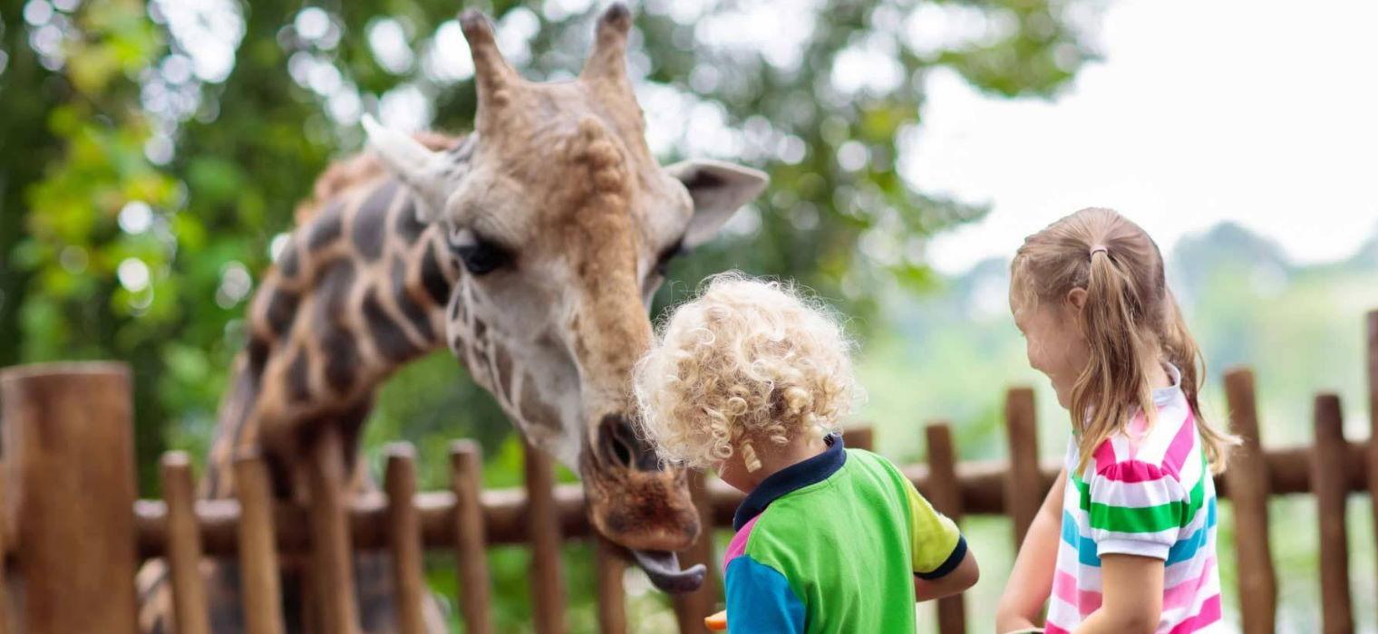 Gli Zoo in Italia: consigli per gite in famiglia tra i più belli che abbiamo
