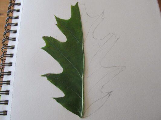 lavoretti autunno per bambini Foglia simmetrica o Foglia Specchio