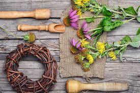 Echinacea: quali proprietà di quello che è considerato un antibiotico naturale