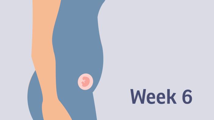 feto a 6 settimane ecografia 6 settimana ecografia 6 settimane a quante settimane si sente il battito sei settimane di gravidanza embrione 6 settimane prima ecografia in gravidanza 6 settimana di gravidanza ecografia 6 settimana di gravidanza battito 6 settimana di gravidanza sintomi 6 settimana di gravidanza ecografia cosa si vede sesta settimana di gravidanza prima ecografia xsesta settimana gravidanza