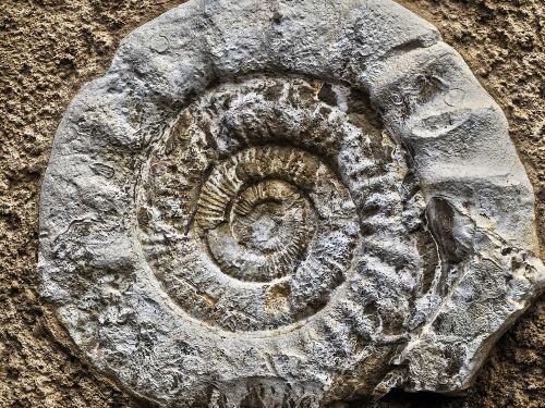 i fossili spiegati ai bambini