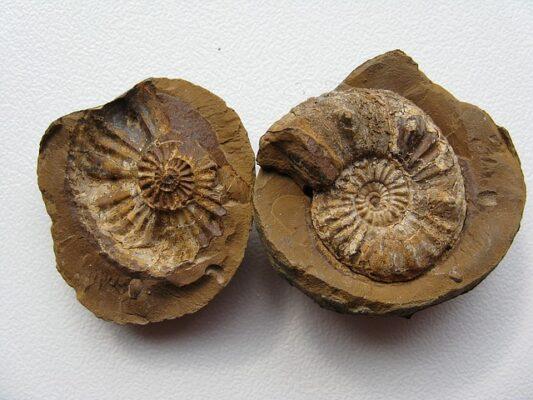tipi di fossili scuola primaria